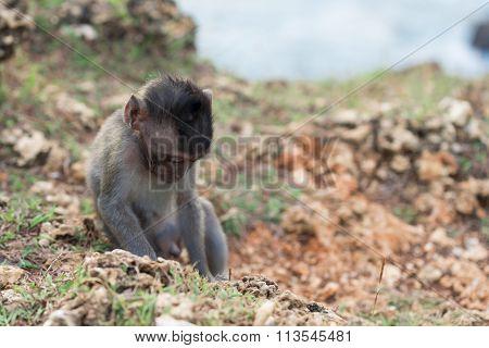 Wildlife Wild Monkey Baby Nature Habitat