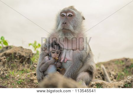 Wildlife Wild Monkey Mother Baby Habitat