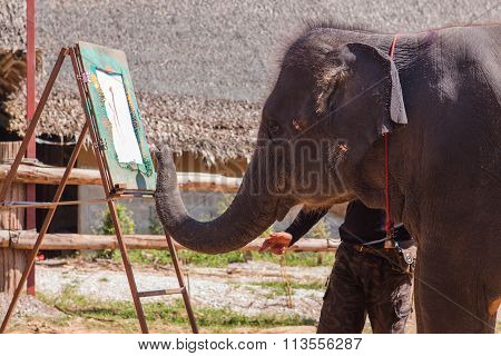 Elephant Show In Thailand.