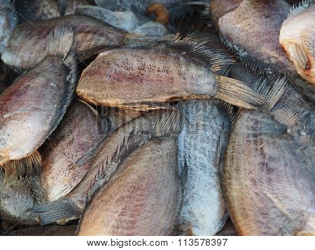 Dried Trichogaster Pectoralis Fish