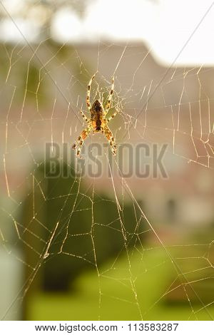 Close Up Of A Spider In Its Web