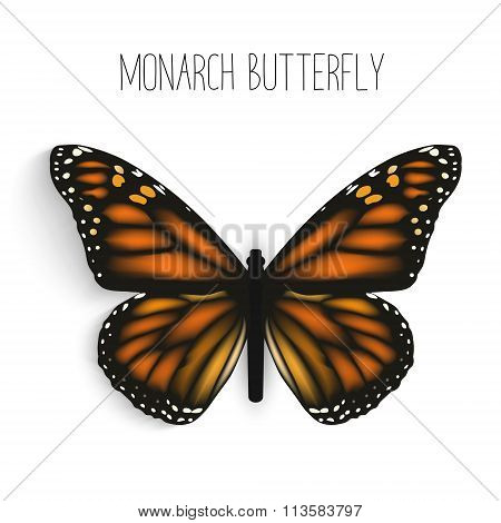 Monarch Butterfly Isolated Realistic