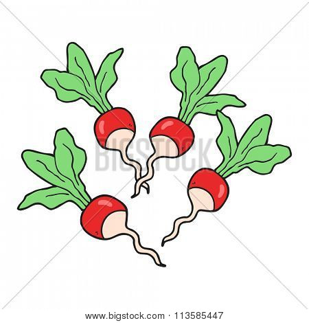 freehand drawn cartoon radishes