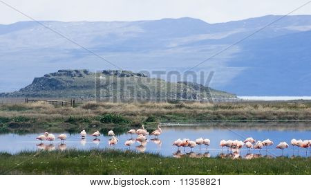 Sobre el lago puede cumplir patagónicas? skimi pink flamingos