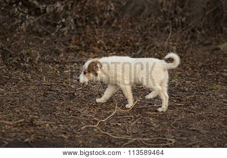 Puppy in search of mom walking through sinister place