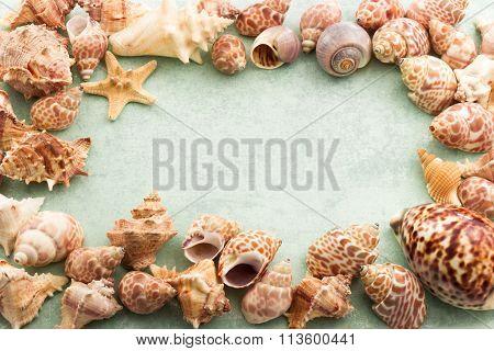 Marine Background, Frame With Seashells And Starfish