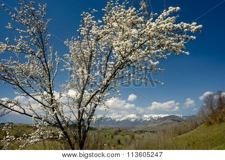 Blossom Tree Against Mountain Landscape Background