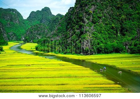 Rice fileds in North of vietnam