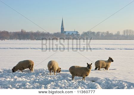 Frozen Landcape With Four Sheep