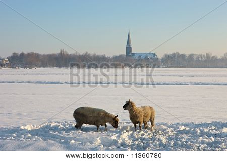 Frozen Landcape With Two Sheep