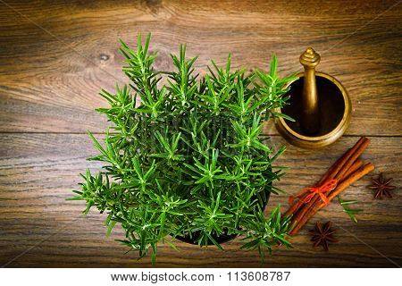 Fresh Tarragon Spice