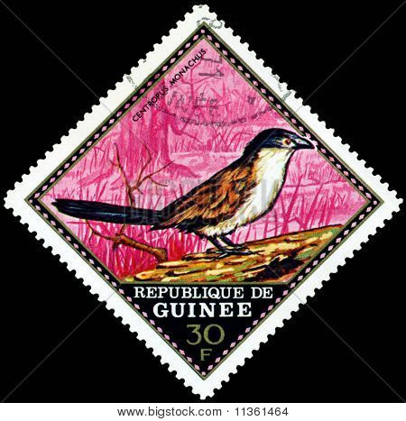 Vintage  Postage Stamp.  Centropus Monachus.