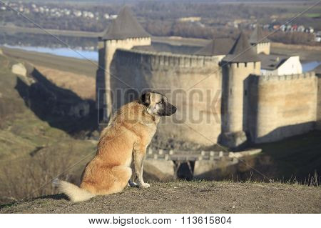 Dog At Castle
