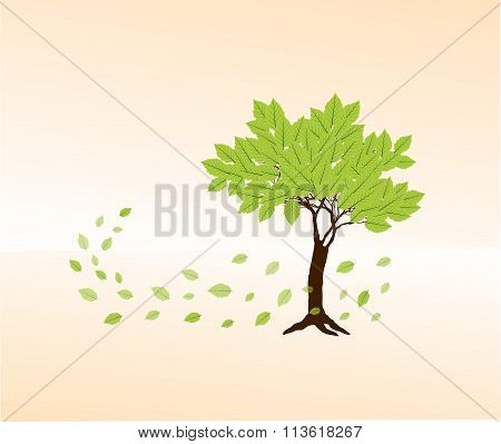 Spring Green Beech  Tree