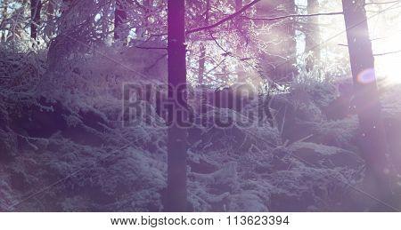 sunny winter mountain landscape