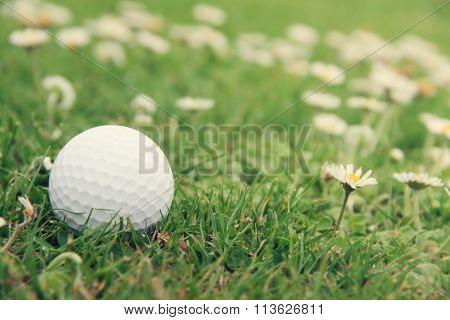 Golf Ball On Course