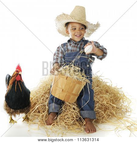 A happy young farm boy examining eggs from his basket while sitting on a hay stack.  A rooster stands nearby.  On a white background.