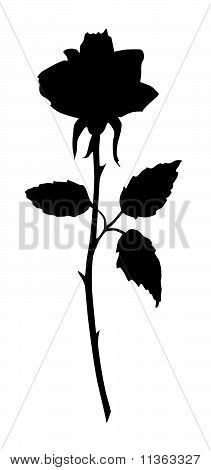 Beautiful rose black silhouette
