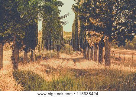 Wild Horse Amongst Cypress Trees