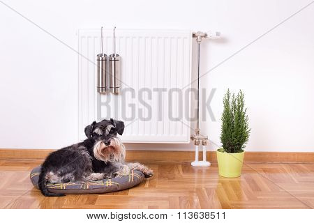 Dog Lying In Front Of Heater