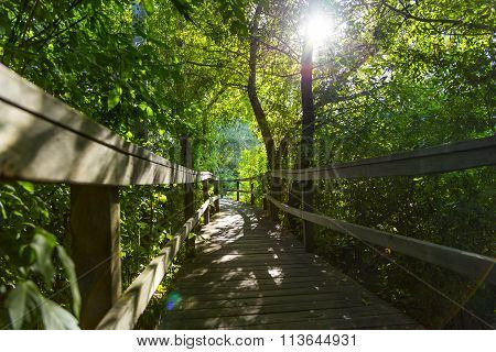 forest pathway of wooden boardwalk and sun flare through foliage