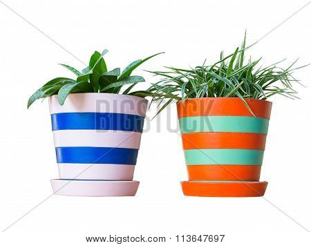 Plants in pots on a white background.