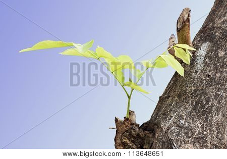 Branches are budding with each image format.