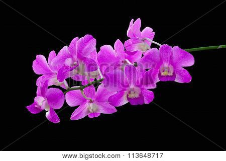 Purple orchids on black background