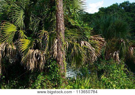 Assorted Subtropical Vegetation