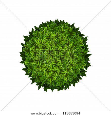 Round Green Bush