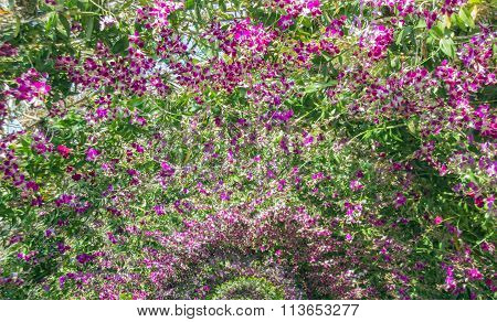 Purple Orchid Archway