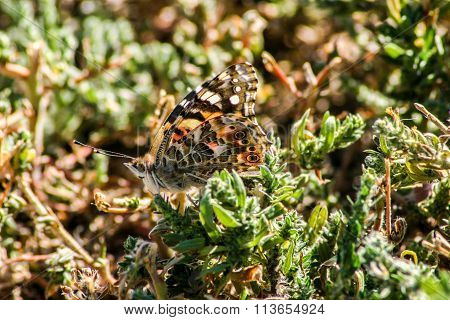 Butterfly Camouflaged in Grass
