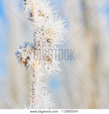 Winter Hoar Frost Macro