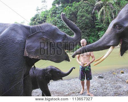 Man feeds bananas to elephants