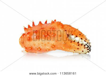 Claw Alaskan King Carb In Isolated White Background