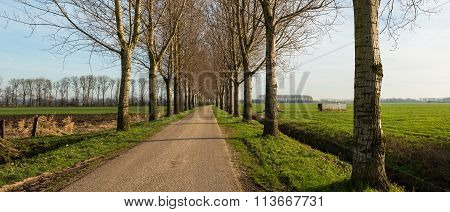 Narrow Country Road Between A Row Of Trees