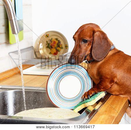 Hardworking Dog Washing The Dishes