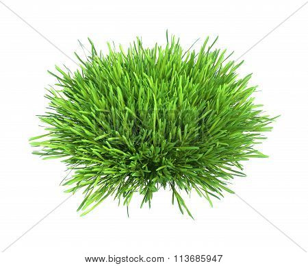 Fresh green grass piece of land isolated on white background