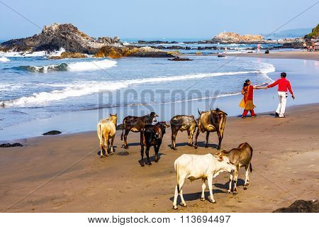 People Walk Along The Beach With Cows