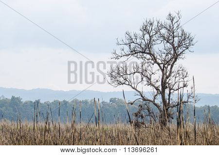 Forest In Nation Park And Blue Background