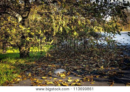 Fall Colors, Leaves On The Ground
