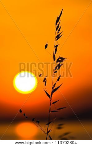 Mediterranean dry grass at sea coast lit by summer sun before sunset