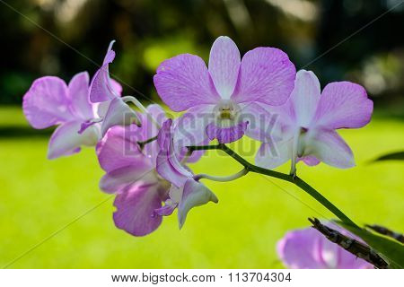 orchids,orchids purple