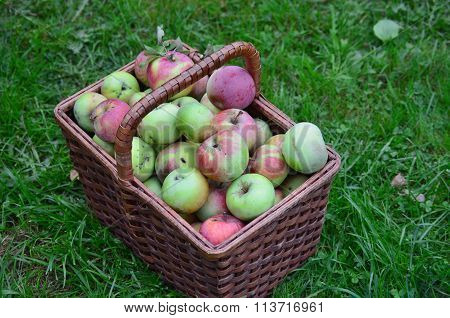 Autumn Fruits, Southern Bohemia