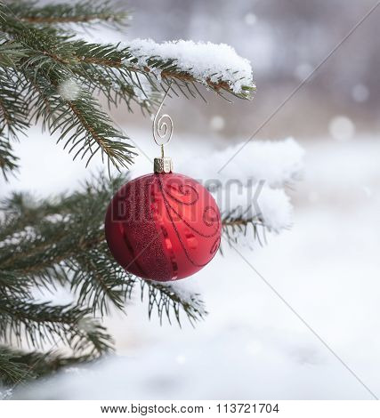 Red Christmas Bauble With On Snowy Pine Branch Defocused Background