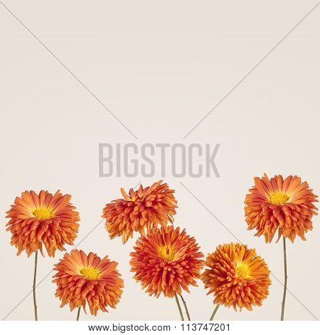 Flowers Background. Aster