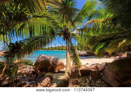 Palm trees on tropical Anse Lazio beach, Seychelles