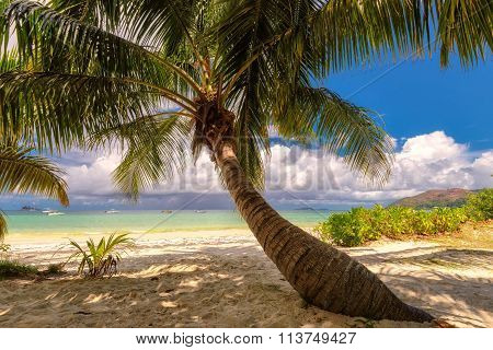 Palm tree on a beach, Praslin