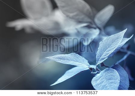 Beautiful frosty winter leaves on blured nature background, close up