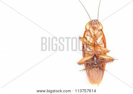 Macro Cockroaches Dead Dirty